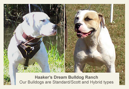 Haaker, pit bull attack, dream bulldog
