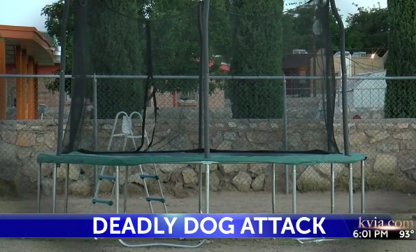 backyard where dogs killed el paso boy