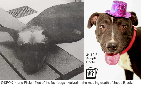 dogs that killed el paso boy