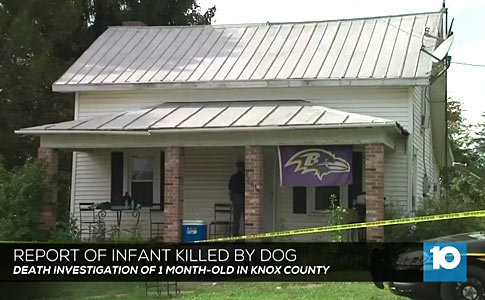 family pit bull kills baby