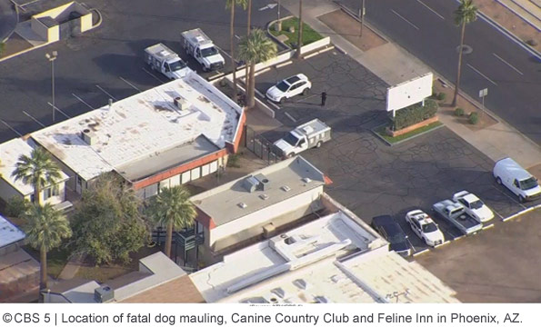 fatal dog mauling, Akita Advocates, Canine Country Club and Feline Inn