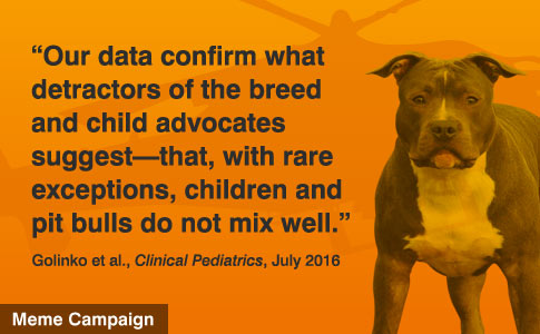 Children and pit bulls do not mix
