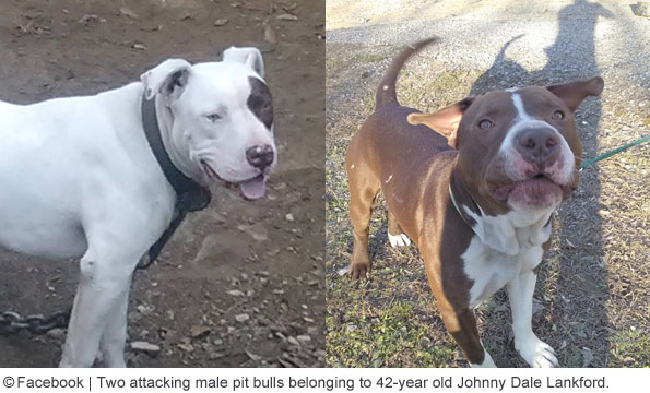 Johny Dale Lankford's pit bulls killed woman