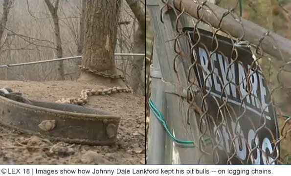 Johnny Dale lankford kept his pit bulls on logging chains