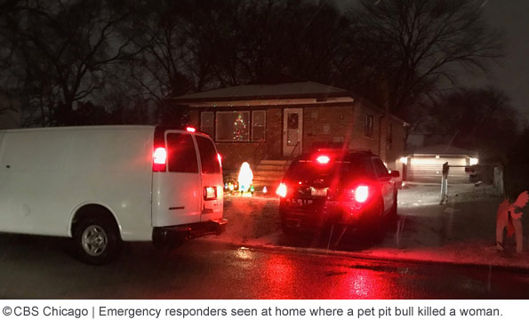 Pit bull kills owner in alsip, illinois, dorothy ford