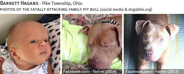 Barrett Hagans fatal dog attack - pit bull, breed identification photograph