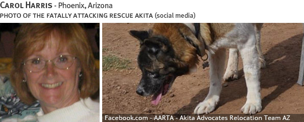 Carol Harris fatal dog attack - akita, breed identification photograph