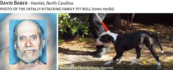 David Baber fatal dog attack - pit bull, breed identification photograph