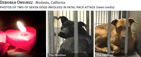 Deborah Onsurez fatal pack attack involving pit bulls, breed identification photograph