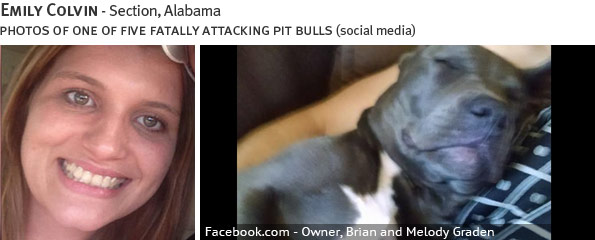 Emily Colvin fatal pit bull attack - pit bull, breed identification photograph