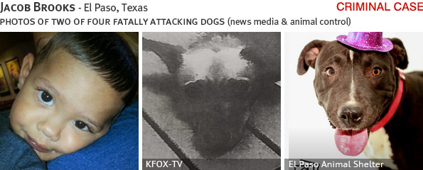 Jacob Brooks fatal pack attack involving pit bull, breed identification photograph