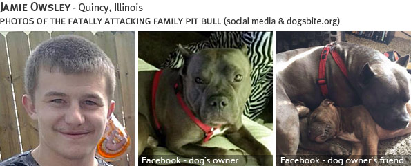 Jamie Owsley fatal dog attack - pit bull, breed identification photograph