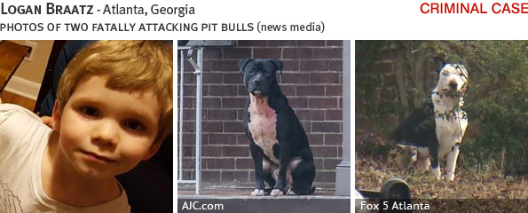Logan Braatz fatal dog attack - pit bull, breed identification photograph
