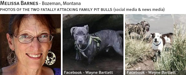 Melissa Barnes fatal dog attack - pit bull, breed identification photograph