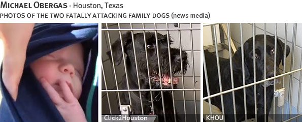 Michael Obergas fatal dog attack - giant schnauzer and labrador, breed identification photograph