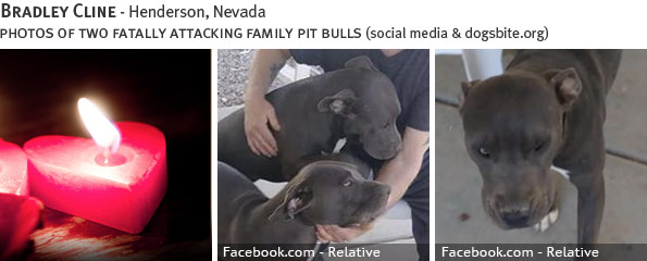 Bradley Cline fatal pit bull attack - breed identification photograph