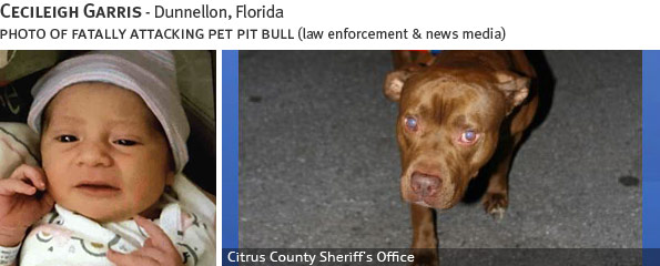 Cecileigh Garris fatal dog attack - pit bull, breed identification photograph