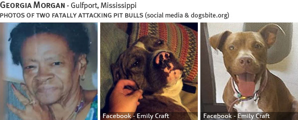 Georgia Morgan fatal dog attack - pit bull, breed identification photograph