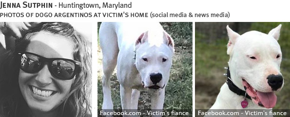 Jenna Sutphin fatal dog attack - pit bull, breed identification photograph