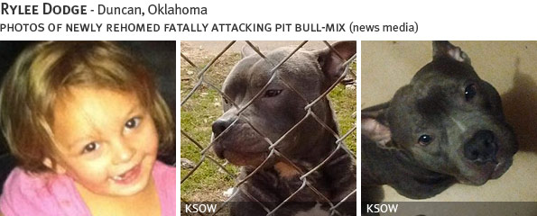 Rylee Dodge fatal dog attack - pit bull, breed identification photograph