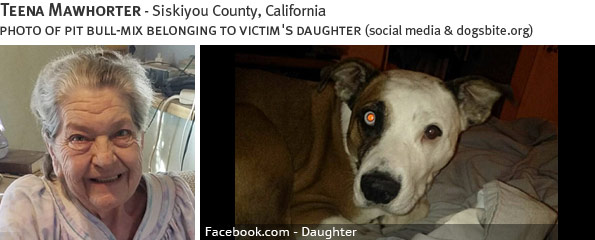 Teena Mawhorter fatal dog attack - pit bull, breed identification photograph