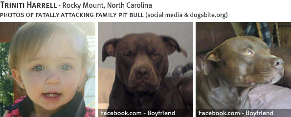 Triniti Harrell fatal dog attack - pit bull, breed identification photograph