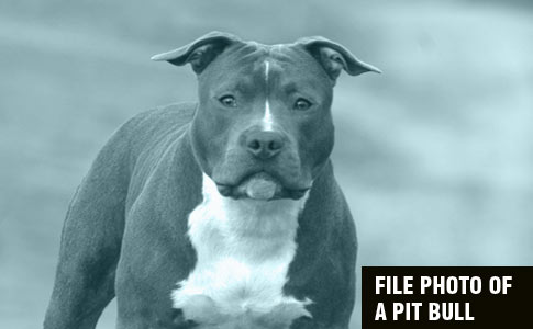 rescued pit bull kills boy in blair county