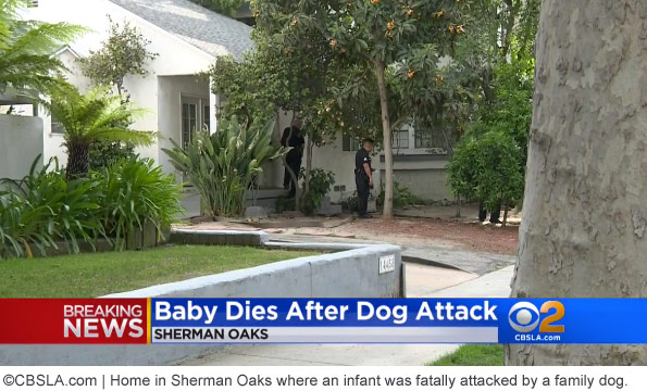 infant in sherman oaks killed by family dogs
