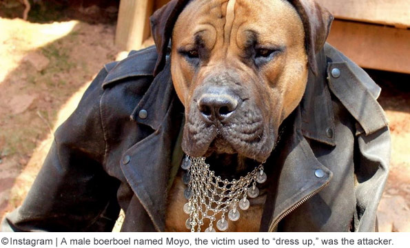 South African boerboel name Moyo killed owner, Jane Egle