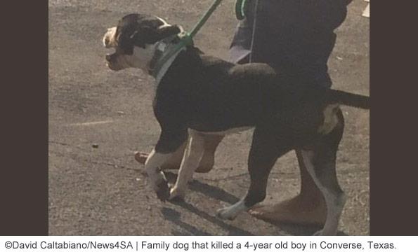 pit bull type dog kills boy in Converse bexar county