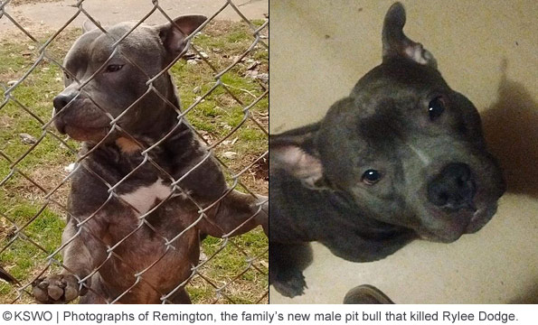 family pit bull remington killed rylee dodge