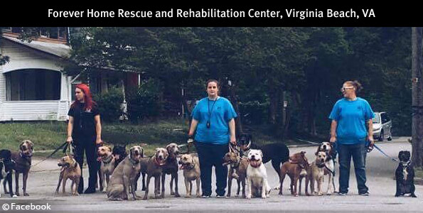 self-appointed k9 expert forever home rescue rehabilitation center