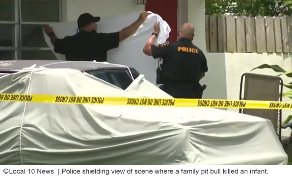 Police shielding fatal pit bull mauling scene from public and reporters in Miramar