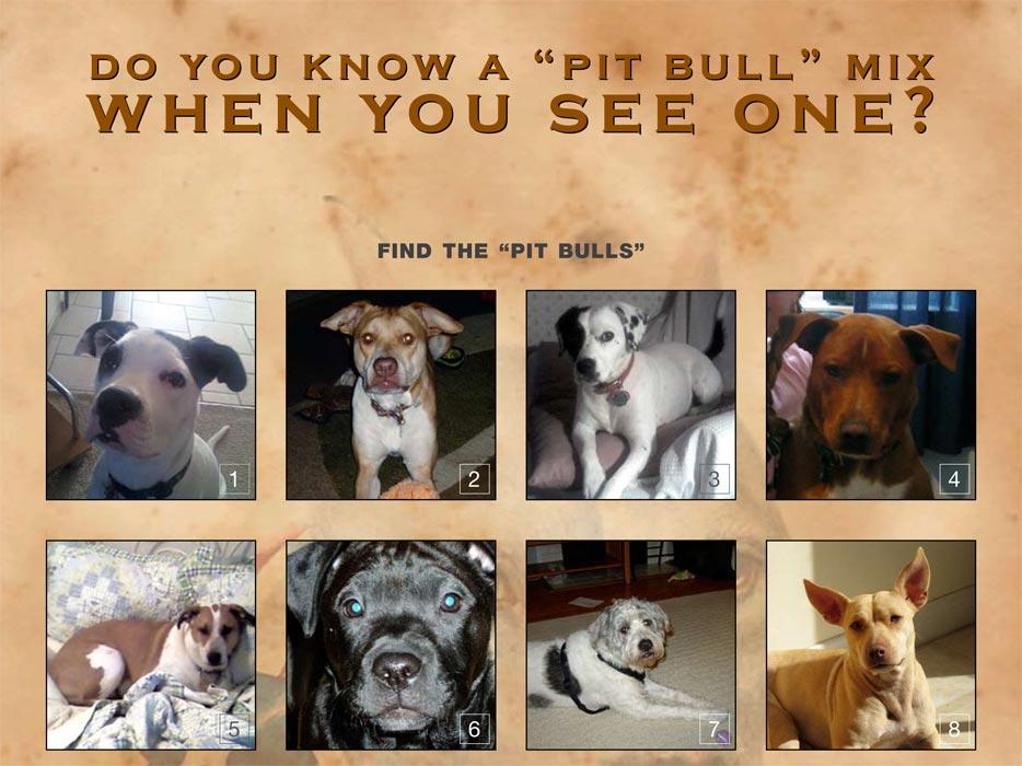 Pit Bull Myths - Dangerous Dogs - DogsBite org