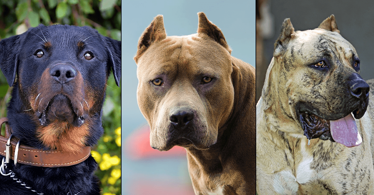 Breed-Specific Laws State-by-State