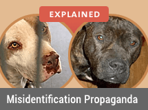 2013 Fatal Dog Attack Breed Identification Photographs