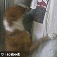 topeka fatal pit bull attack
