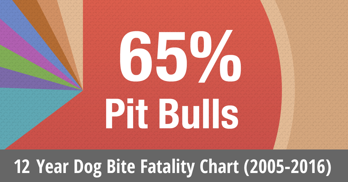 12 year dog bite fatalities by breed