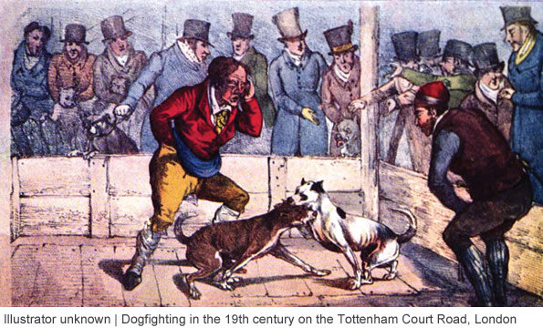 19th century dogfighting, pit bull, london