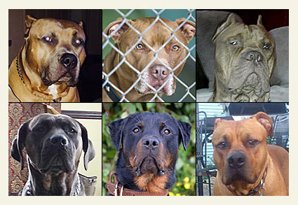 2014 fatal dog attack breed identification photographs
