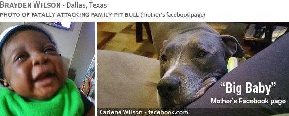 Fatal pit bull attack - Brayden Wilson