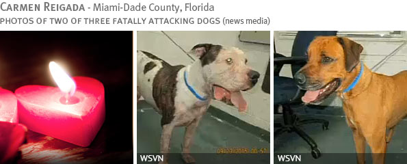 Fatal pit bull attack - Carmen Reigada