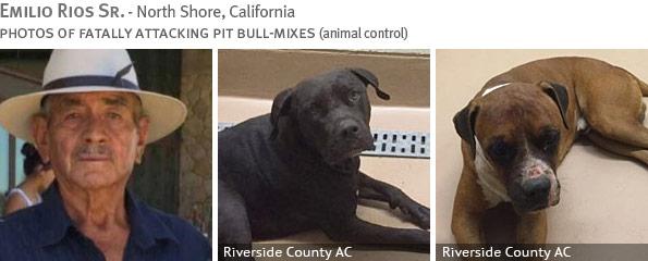 Fatal pit bull attack - Emilio Rios