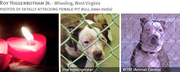 Fatal pit bull attack - Roy Higgenbotham