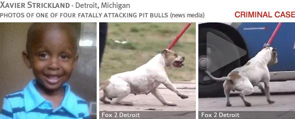 Fatal pit bull attack - Xavier Strickland