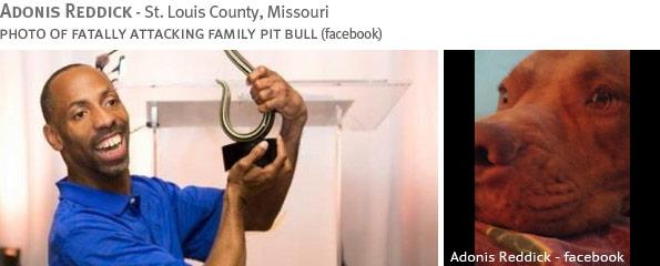Fatal pit bull attack - Adonis Reddick