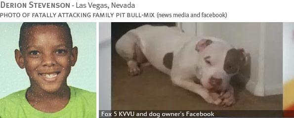 Fatal pit bull attack - Derion Stevenson
