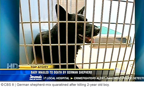 rescued dog that killed aaron carlson