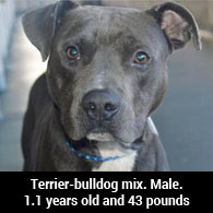 Miami Dade Adopts Out Pit Bulls