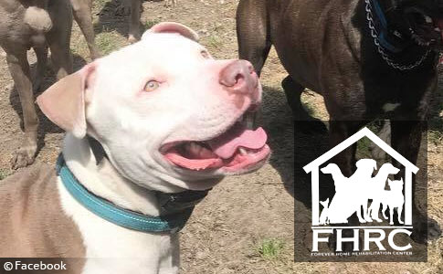 pit bull adopted out by Forever Home Rehabilitation kills woman